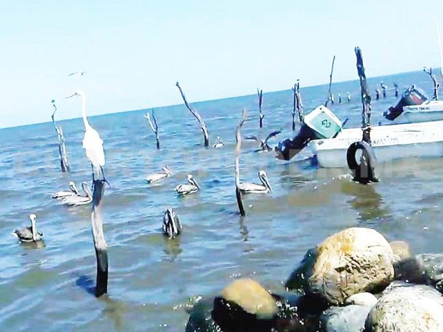 Pescadores suspenden actividades en toda la zona costa