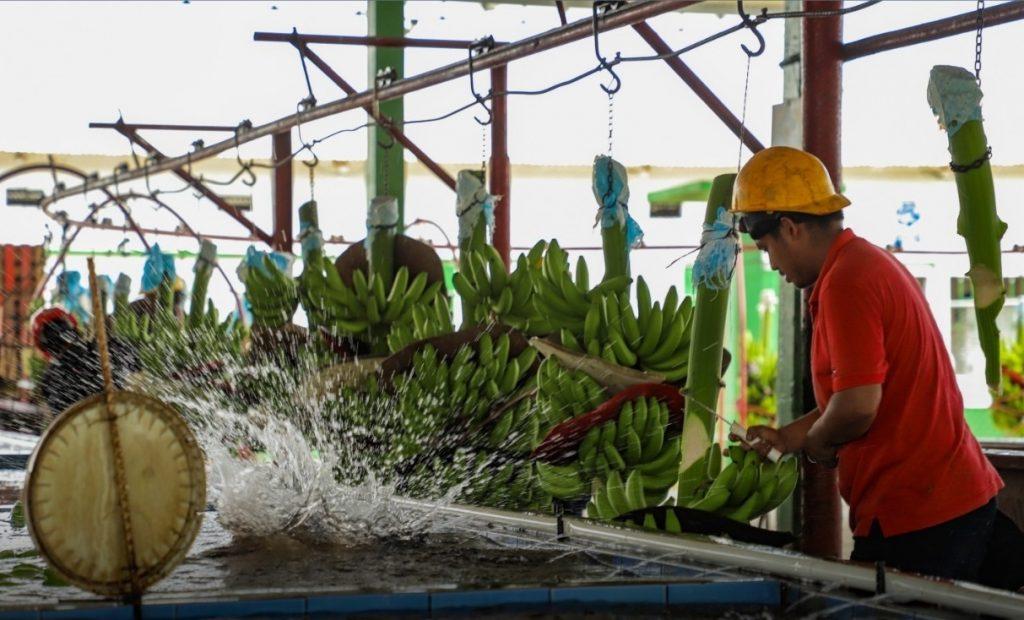 Promociona Secretaria de Turismo de Chiapas ruta del plátano de Suchiate