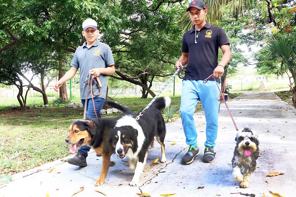 Asociaciones civiles y Ayuntamiento tuxtleco fortalecerán acciones de bienestar animal